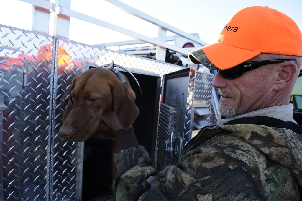 . Marty Snella checks in on his pheasant hunting Vizslas, including Thelma and Louise, before heading out to the field for opening day in Holyoke, Saturday, November 9, 2013. Thousands of hunters from around the state converged on Colorado\'s eastern plains for pheasant and quail hunting with reports of slightly improved conditions over last season. Scott Willoughby, The Denver Post