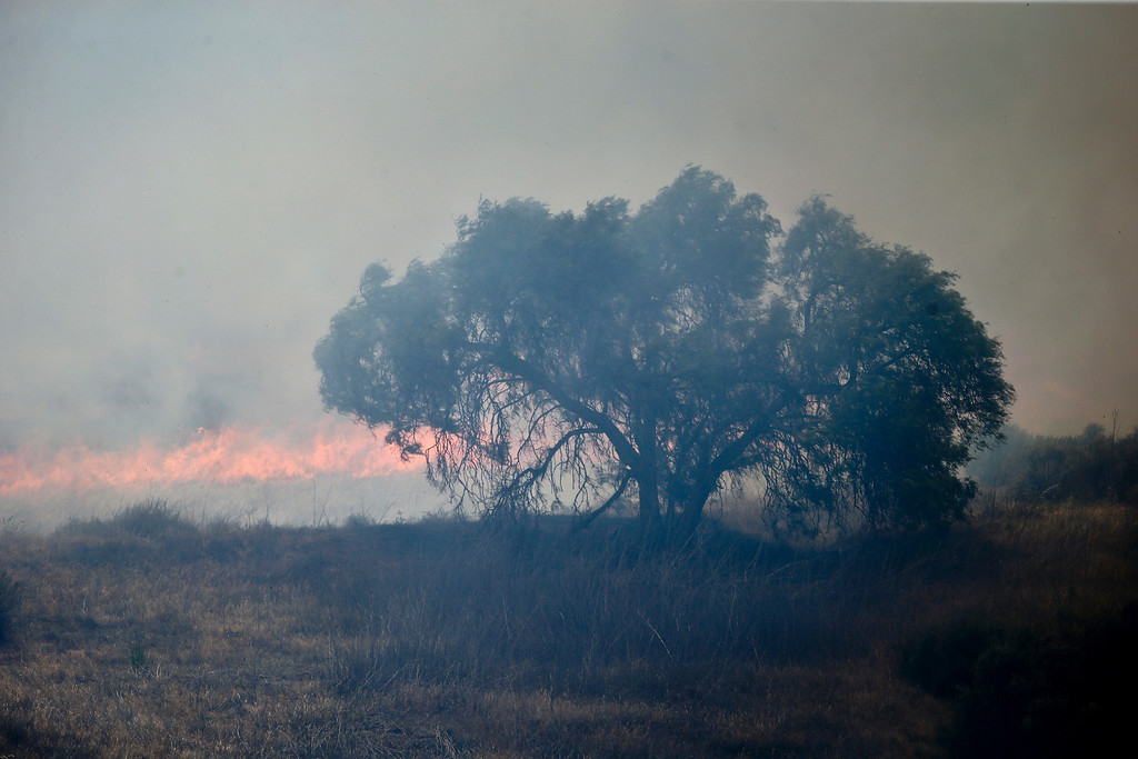 . A lone tree stands in the path of approaching flames as wild fire burns through a canyon Tuesday, May 13, 2014, in San Diego.  (AP Photo)