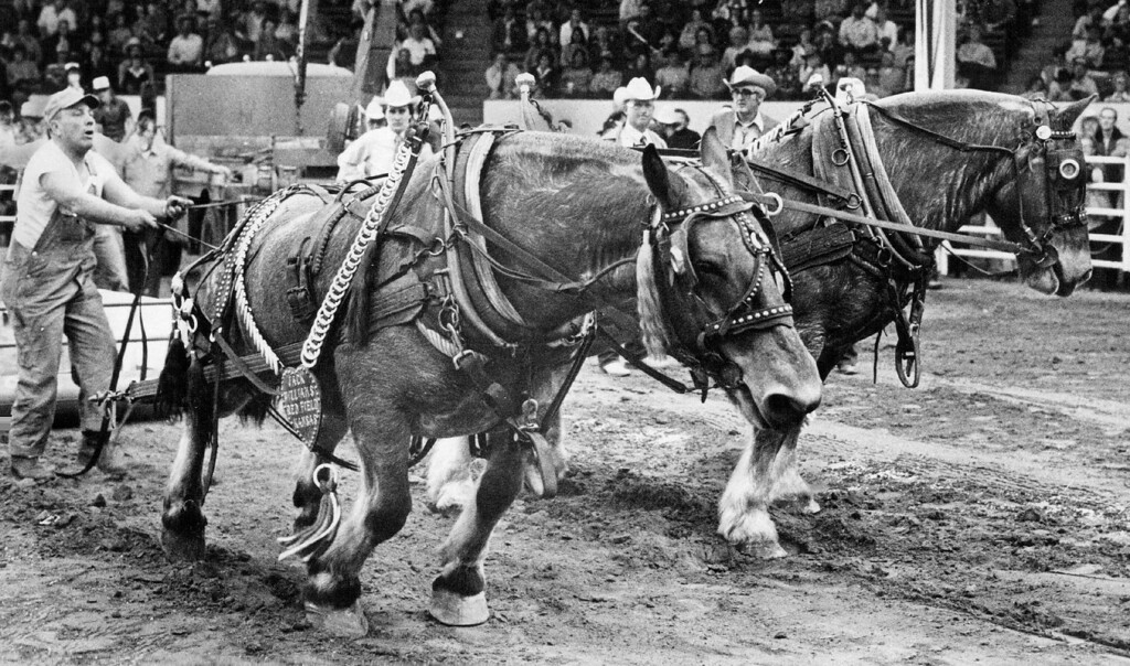 . Williams\' Team Strains to Pull Its Load, Though He Stopped them at this point  Their efforts weren\'t enough to put him into the finals. 1981. Dave Buresh, The Denver Post