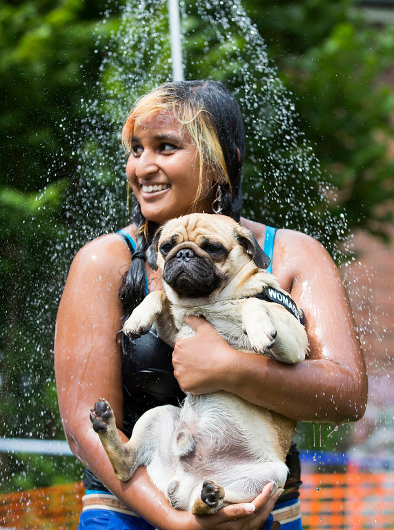 ". Jasmina and her pug dog Eddy take a shower during a pup dog meeting in Berlin, Germany, Saturday, Aug. 3, 2013. Some 40 pup dogs and their owners met in Berlin for the ""4th International Pup Dog Meeting\"" including a dog race. (AP Photo/Gero Breloer)"
