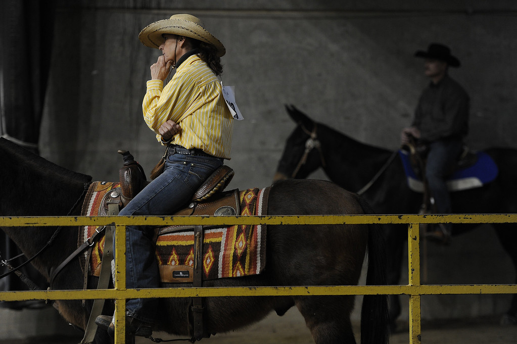 . DENVER, CO- JANUARY 27:   CIndi Slemp, of Sturgeon, Missouri, concentrates while sitting on her mule Pacos Bill before racing in the Keyhole Mule Race.  Slemp won the event.  The final day of the 2013 National Western Stock show was Sunday, January 27th.  One of the big events for the day was the PRCA Pro Rodeo finals in the Coliseum.  The event featured bareback riding, steer wrestling, team roping, saddle bronc riding, tie down roping, barrel racing and bull riding.  (Photo By Helen H. Richardson/ The Denver Post)