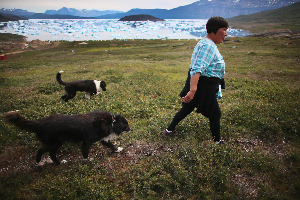 . Arnaq Egede walks to the potato field on her family\'s farm on July 31, 2013 in Qaqortoq, Greenland. The farm, the largest in Greenland, has seen an extended crop growing season due to climate change.  (Photo by Joe Raedle/Getty Images)