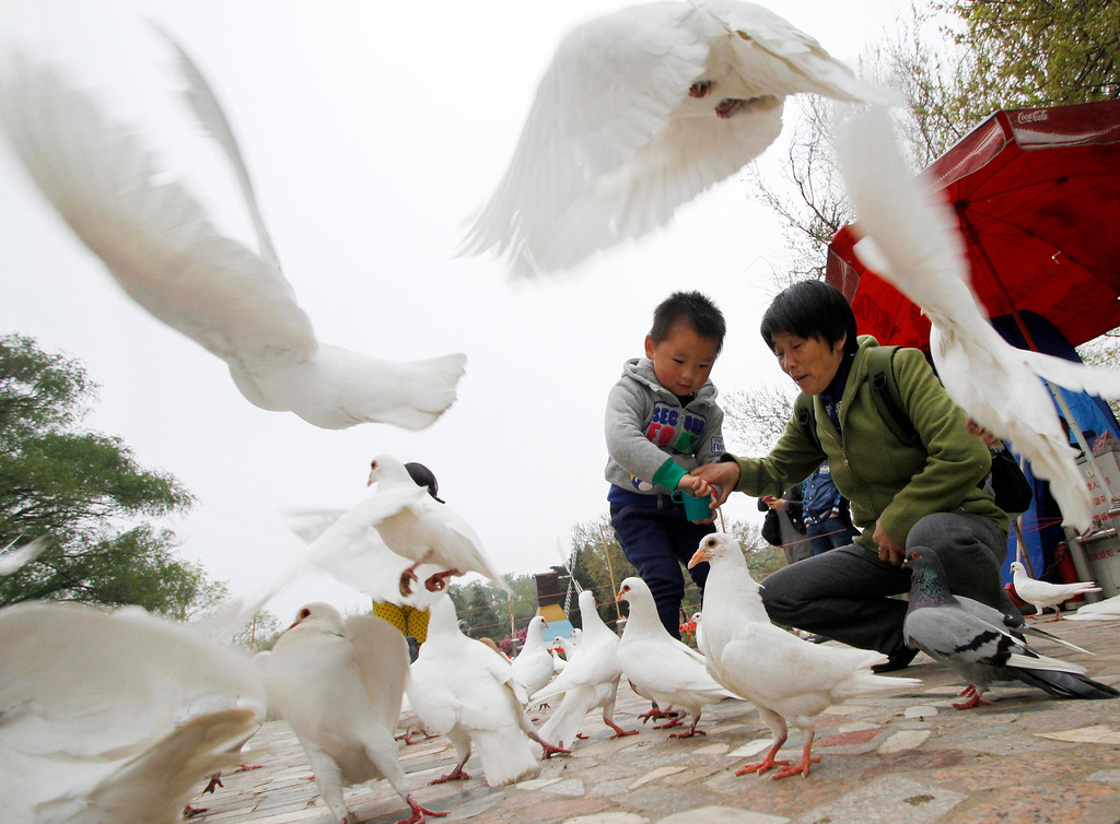 . People feed pigeons at a park in Nanjing, Jiangsu province, April 5, 2013. Health authorities in China said on Saturday that the country\'s 16 confirmed H7N9 bird flu cases were isolated and showed no sign that it is transmitted from human to human, Xinhua News Agency reported. Picture taken April 5, 2013. REUTERS/China Daily