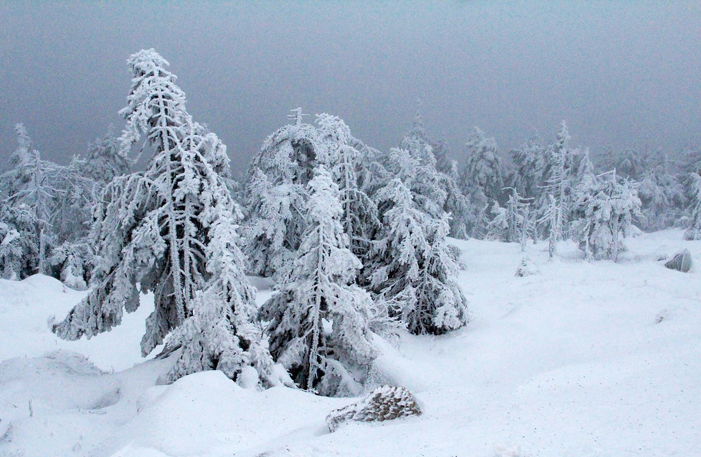 . Trees are covered with snow on Brocken Mountain near Schierke, Germany, 05 December 2013. Storm front Xaver will reach full force on later the afternoon.  EPA/RICO LOEB