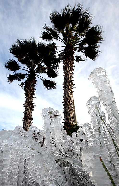 . Ice-covered plants are seen in Panama City Beach, Fla. on Tuesday, Jan. 7, 2014.   Brutal, record-breaking cold descended on the East and South, sending the mercury plummeting Tuesday.  Sprinklers left on overnight created the icy cover. (AP Photo/The News Herald, Andrew Wardlow)