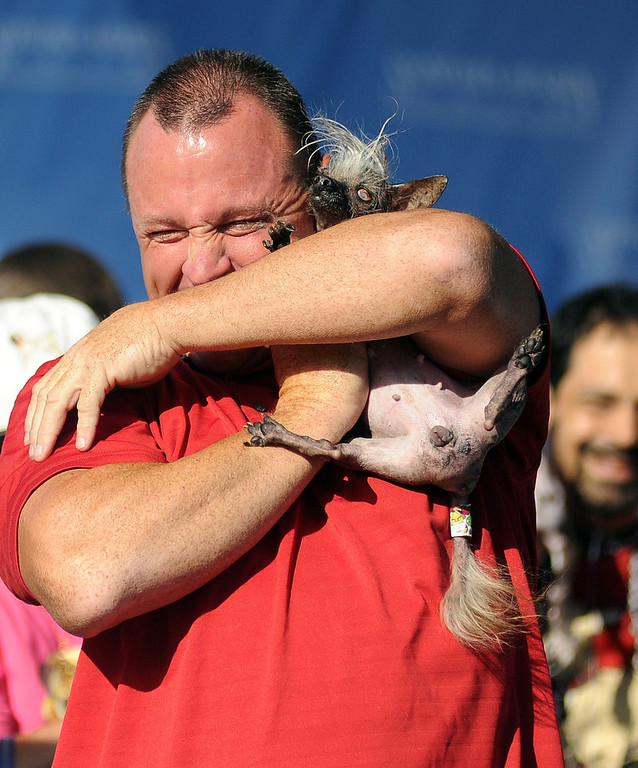 . Jason Wurtz squeezes SweePee Rambo, a Chihuahua/Chinese Crested mix at The World\'s Ugliest Dog Competition in Petaluma, California on June 20, 2014. Peanut won the competition and was voted the world\'s ugliest dog. (Josh Edelson/AFP/Getty Images)