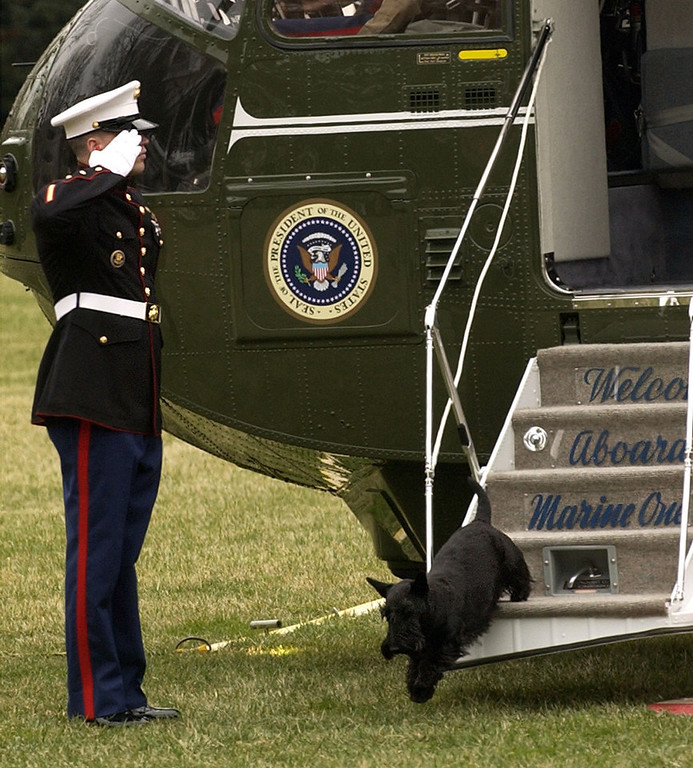 . A Marine guard salutes as President Bush\'s dog Barney disembarks from Marine One on the South Lawn of the White House Sunday, March 14, 2004.  Barney was returning from Camp David with President Bush and first lady Laura Bush.   (AP Photo/Gerald Herbert)