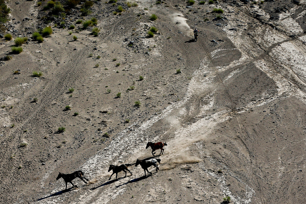 . Horses run as Marc Coma of Spain approaches with his KTM motorcycle during the second stage of the Dakar Rally between the cities of San Luis and San Rafael in San Rafael, Argentina, Monday Jan. 6, 2014. (AP Photo/Victor R. Caivano)