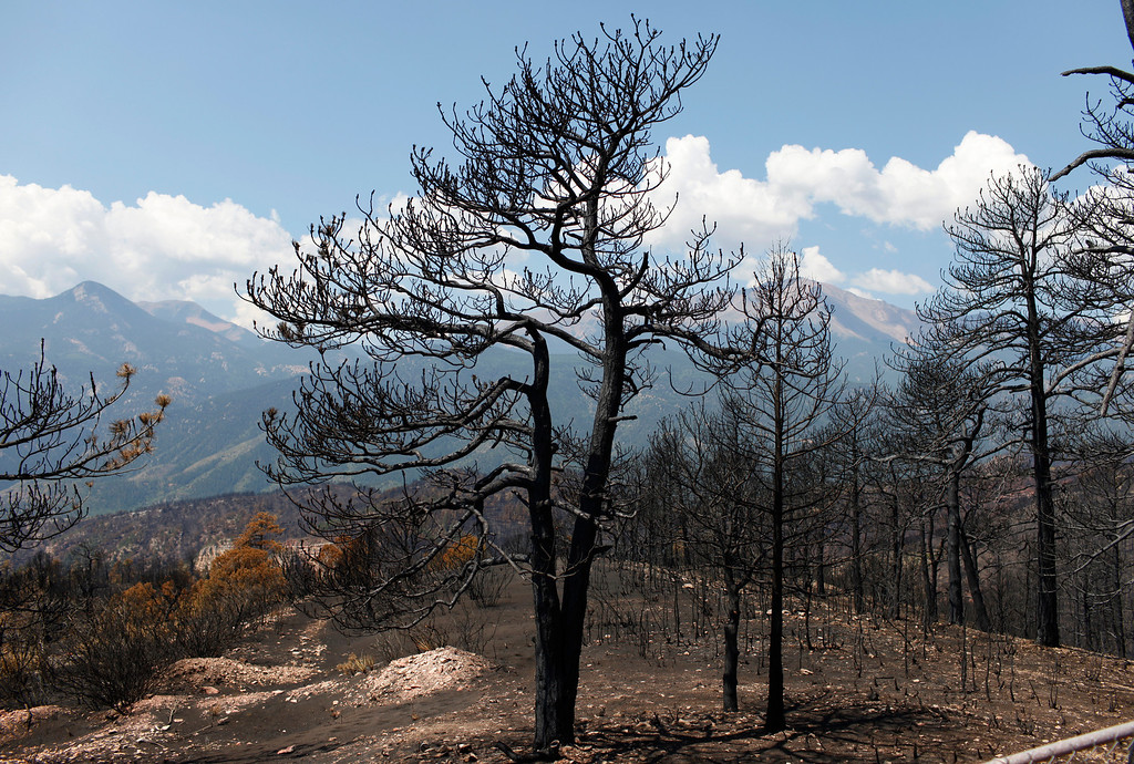. A burned area in Solitude Park on Wednesday, July 11, 2012, where wildfire mitigation techniques helped firefighters make a line and save the Cedar Heights neighborhood. Vegetation in the park area had been thinned which helped control the Waldo Canyon fire and save homes. Stephen Mitchell, The Denver Post