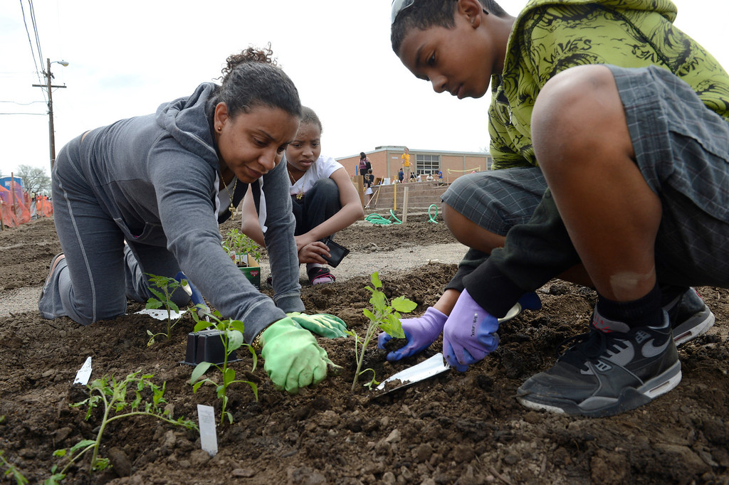 . AURORA, CO. - MAY 18:  Solemi Pedraza and her children, Nemiah, 10, and St. Marks, 13, work in their family plot during the North Middle School Garden Festival in Aurora, CO May 18, 2013. Solemi  says she plans to donate her vegetable to a local food bank. The celebration marked the opening of the first school-based community garden in Aurora Public Schools. The project, funded by The Piton Foundation, was made possible through a partnership of Aurora Public Schools, Denver Urban Gardens (DUG), and Anschutz Medical Campus Department of Family Medicine and BRANCH, a multi-disciplinary student organization from the medical campus. A second garden is scheduled to open later this year at Hinkley High School. (Photo By Craig F. Walker/The Denver Post)