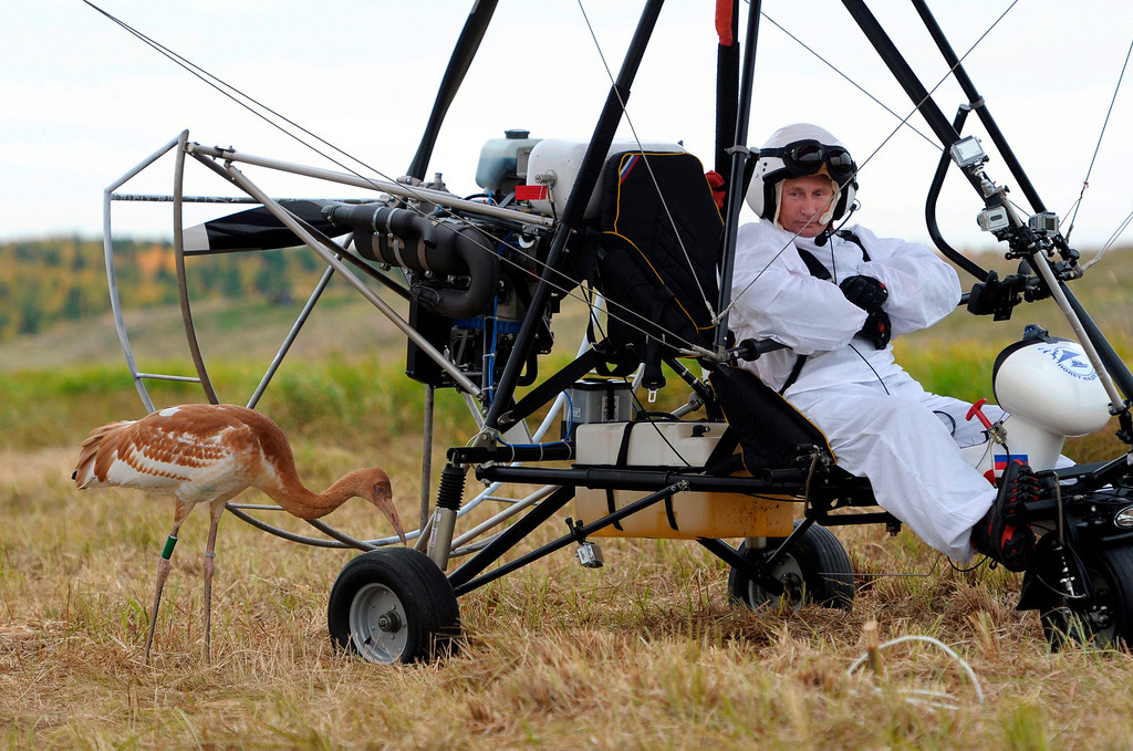 . In this Sept. 5, 2012 file photo, Russian President Vladimir Putin waits in a motorized hang glider next to a Siberian white crane, on the Yamal Peninsula, in Russia. Putin took part in a flight as part of a program devised by environmentalists to lead the endangered cranes, which were raised in captivity, on their migration to Asia. (AP Photo/RIA-Novosti, Alexei Druzhinin, Presidential Press Service, File)