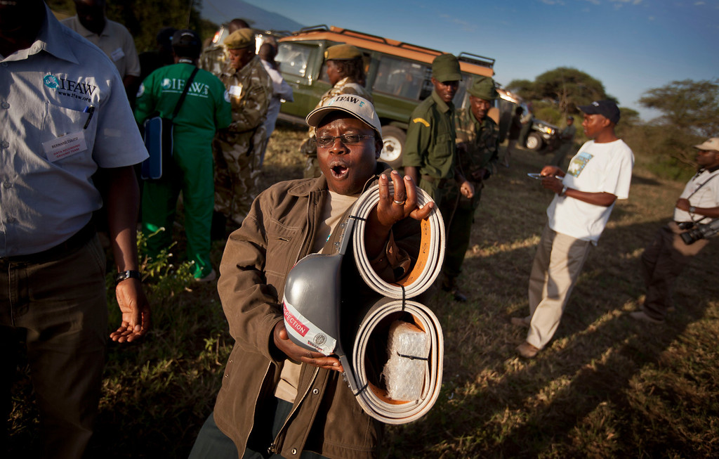 . In this Tuesday, Feb. 19, 2013 photo, a member of the International Fund for Animal Welfare (IFAW), feels the weight of an elephant GPS-tracking collar as he and a team from the Kenya Wildlife Service (KWS) prepare to fit them to elephants to monitor their migration routes and to help prevent poaching, at the Kimana Wildlife Sanctuary next to Amboseli National Park in southern Kenya, near the border with Tanzania. (AP Photo/Ben Curtis)