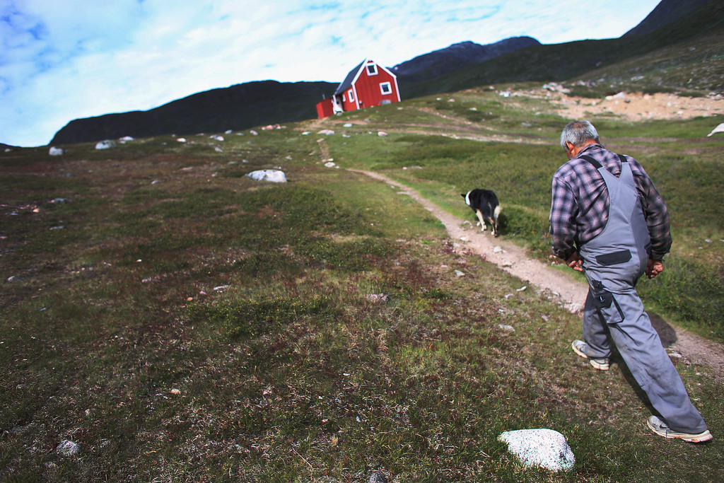 . Potato farmer Ferdinan Egede walks to his house on July 31, 2013 in Qaqortoq, Greenland. The farm, the largest in Greenland, has seen an extended crop growing season due to climate change.  (Photo by Joe Raedle/Getty Images)