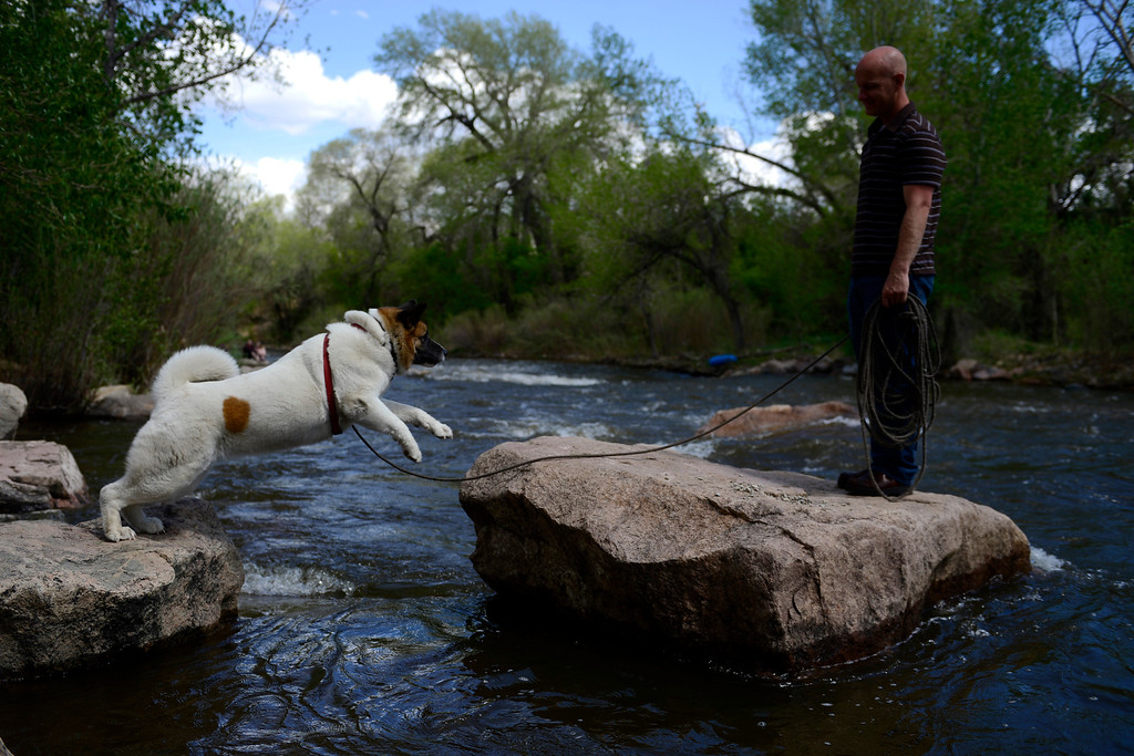 . Dave Schlote watches as his dog, Nandi, a 5-year-old akita, jumps from rock to rock during Golden Games at the Clear Creek Whitewater Park. (Photo by AAron Ontiveroz/The Denver Post)