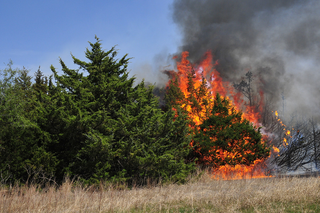 . A wildfire burns through a grove of Red Cedar trees as firefighters continued to work on containing the blaze Monday, May 5, 2014, in Guthrie, Okla. (AP Photo/Nick Oxford)