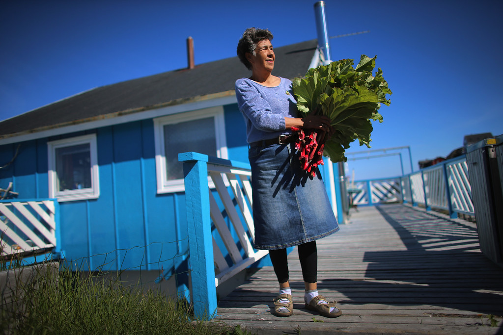". Loretta Henriksen holds the rhubarb she gathered from the garden in front of her home on July 27, 2013 in Nuuk, Greenland. Nuuk, the capital of the country of about 56,000 people, is where the government is trying to balance the discovery of minerals and other new opportunities brought on by climate change with the old ways of doing things. Premier Aleqa Hammond, the leader of Greenlands Parliament, said: ""Climate change is one of the major issues that were dealing with in the political Greenland, in the cultural Greenland and in the business sector of Greenland. Climate change is not only a bad thing for Greenland. Climate change has resulted in many other new options for Greenland.  (Photo by Joe Raedle/Getty Images)"