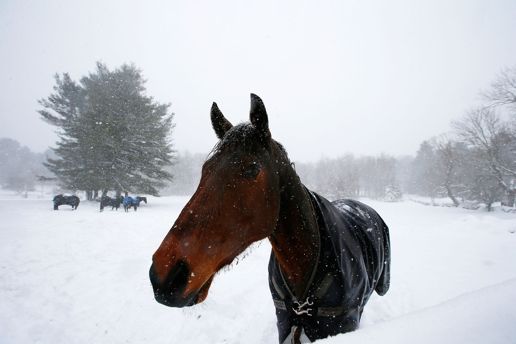. A horse stands in a snow-covered field in Dover, Massachusetts March 8, 2013 as a slow-moving winter storm brought a combination of snow, rain and high winds to the northeast U.S. after moving through the mid-Atlantic states earlier in the week.   REUTERS/Brian Snyder