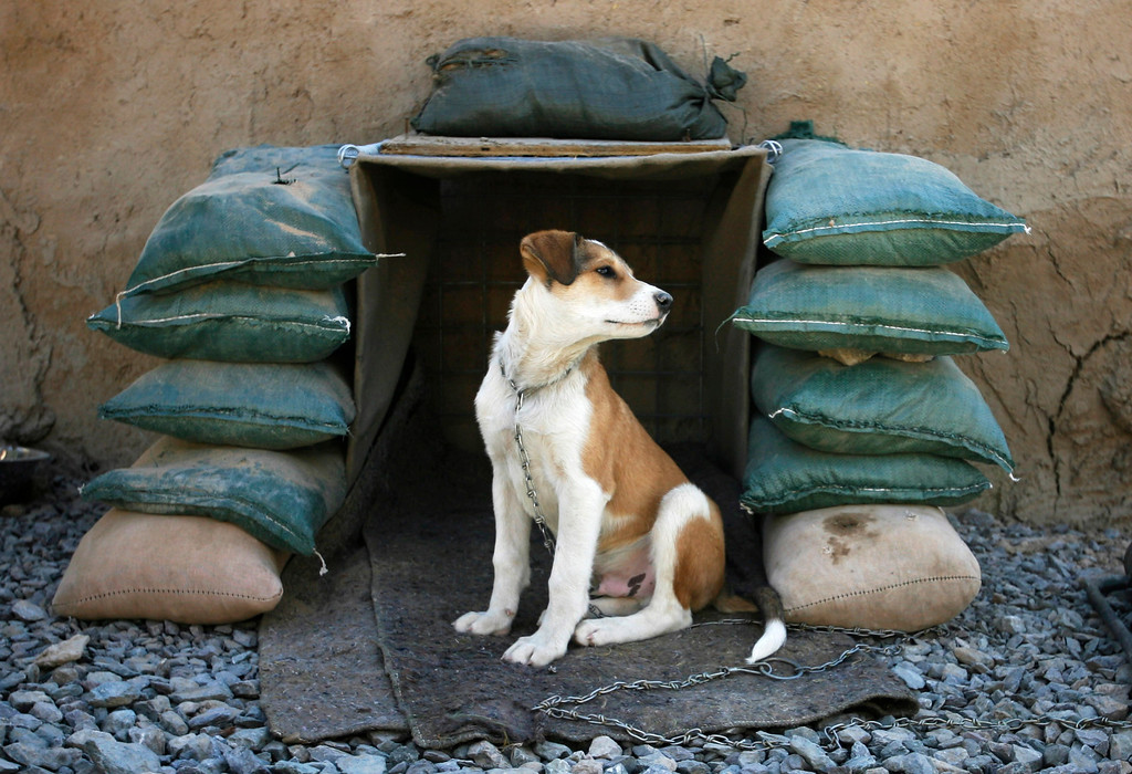. Shadow, an Afghan puppy owned by Canadian soldiers from the NATO-led coalition, sits in his sand-bagged kennel at Three Tank Hill base near Panjwaii town in Kandahar province, southern Afghanistan, October 27, 2007. REUTERS/Finbarr O\'Reilly