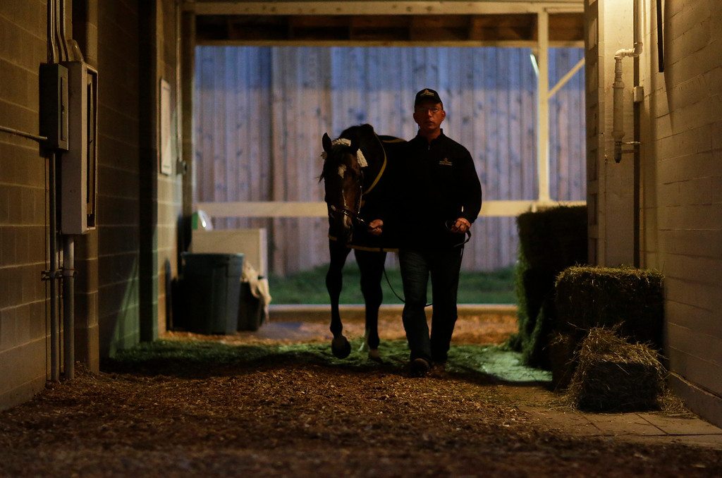. Dan Queenan walks Kentucky Derby entrant Commanding Curve after a morning workout at Churchill Downs Friday, May 2, 2014, in Louisville, Ky. (AP Photo/David Goldman)