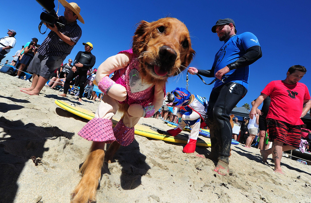 . Surf dogs Kalani (L) and Hanzo (R) meet the media before surfing in tandem at the 5th Annual Surf Dog competition at Huntington Beach, California, on September 29, 2013.  AFP PHOTO/Frederic J. BROWN/AFP/Getty Images