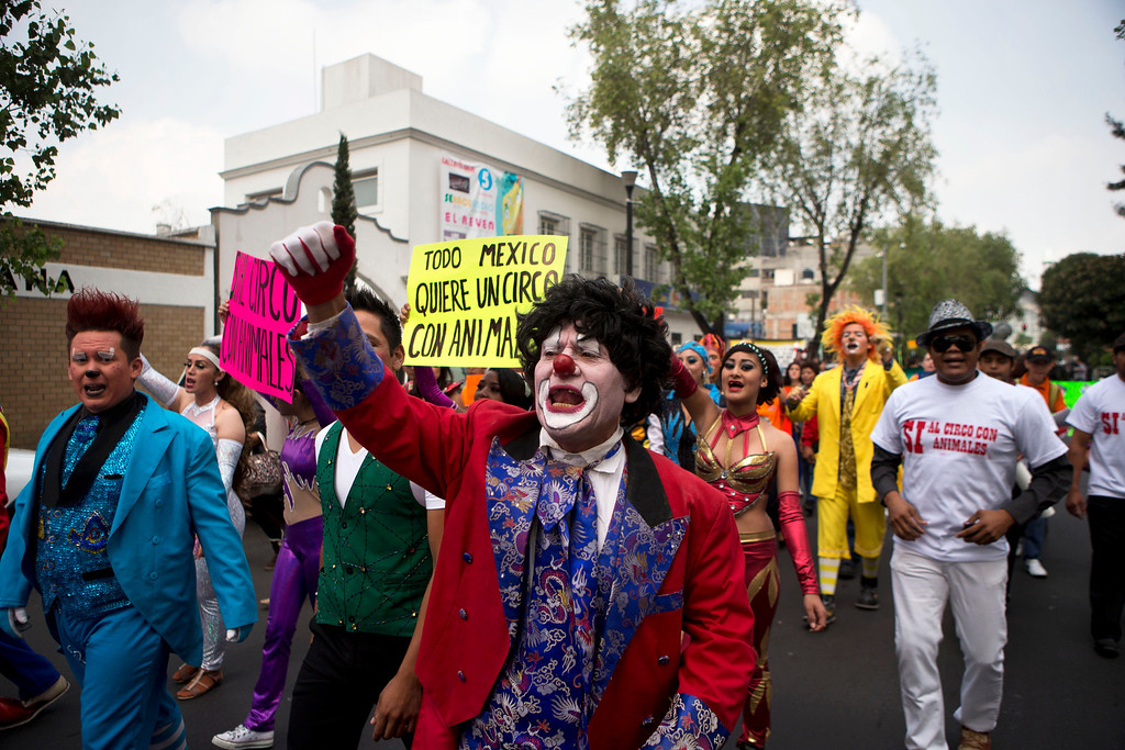 ". Clowns and other circus performers carry signs that read in Spanish ""All of Mexico wants a circus with animals,\"" and \""Yes to a circus with animals,\"" as they protest a new city ban on animals in circuses, in Mexico City, Tuesday, June 10, 2014. The city was the latest of several cities and states in Mexico to ban circus animal acts, though the measure passed Monday does not apply to shows with dolphins or bullfighting, nor does it prohibit the use of animals in Mexico\'s traditional rodeos. (AP Photo/Rebecca Blackwell)"