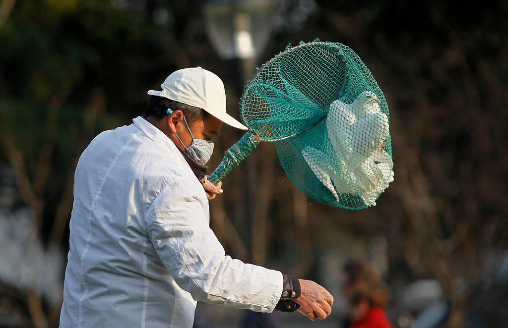 . A public park staff catches a dove at a public area in People Square, downtown Shanghai April 6, 2013. Health authorities in China said on Saturday that the country\'s 16 confirmed H7N9 bird flu cases were isolated and showed no sign that it is transmitted from human to human, Xinhua News Agency reported. Shanghai municipal government has ordered workers to remove pigeons from public area to prevent the spread of H7N9 bird flu to humans, local media reported.  REUTERS/Aly Song