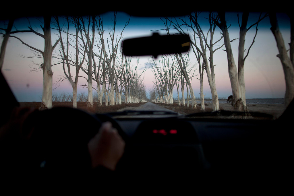 . In this May 6, 2013 photo, trees line a road seen through a car in Epecuen, a village which once was submerged in water in Argentina.  A strange ghost town that spent a quarter-century under water is coming up for air again in the Argentine farmlands southwest of Buenos Aires. (AP Photo/Natacha Pisarenko)