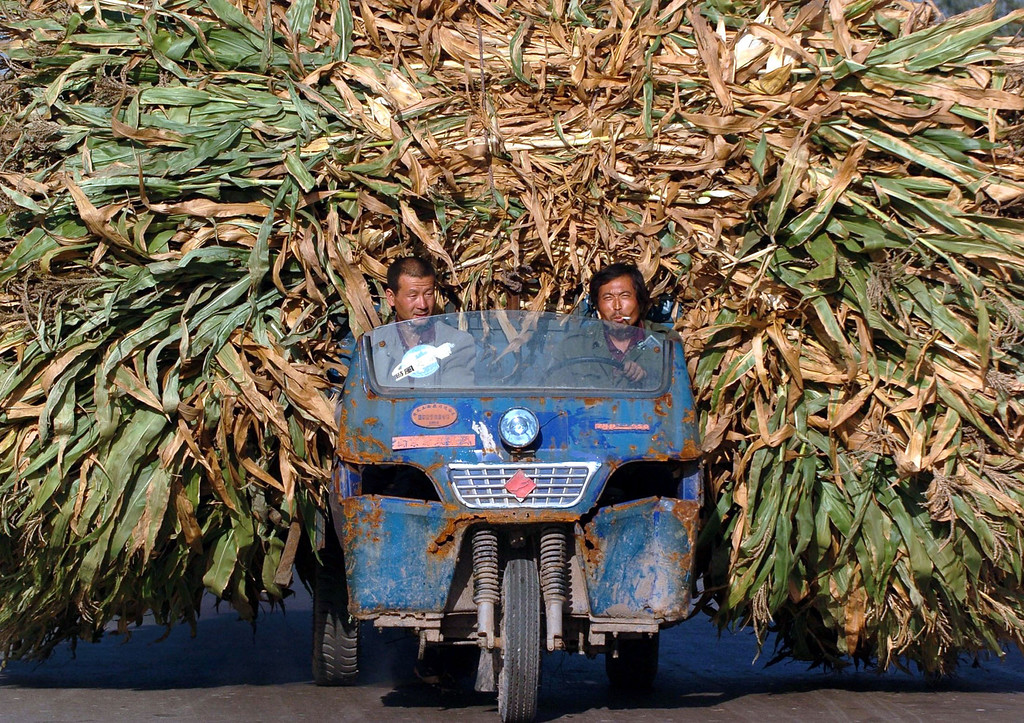 . Chinese farmers transport harvested barley at a village in central Shanxi province in this picture taken September 21, 2004.  REUTERS/China Photos