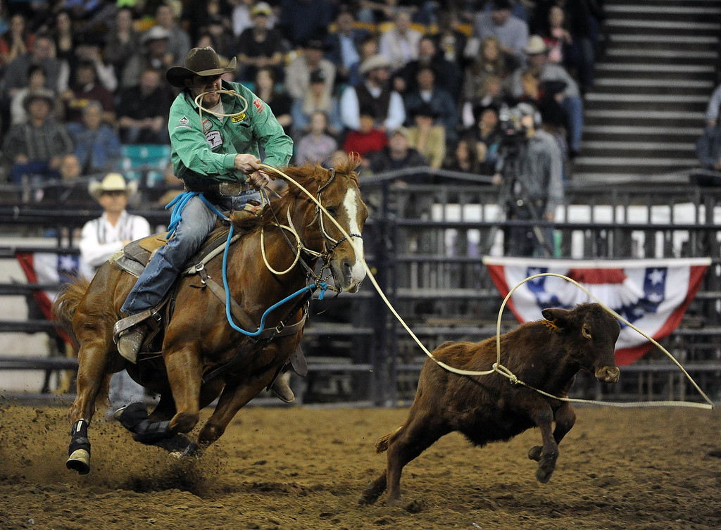 . DENVER, CO- JANUARY 27:   Rhen Richard, of Roosevelt, Utah, a ropes a calf during the tie down roping event in the rodeo.  The final day of the 2013 National Western Stock show was Sunday, January 27th.  One of the big events for the day was the PRCA Pro Rodeo finals in the Coliseum.  The event featured bareback riding, steer wrestling, team roping, saddle bronc riding, tie down roping, barrel racing and bull riding.  (Photo By Helen H. Richardson/ The Denver Post)