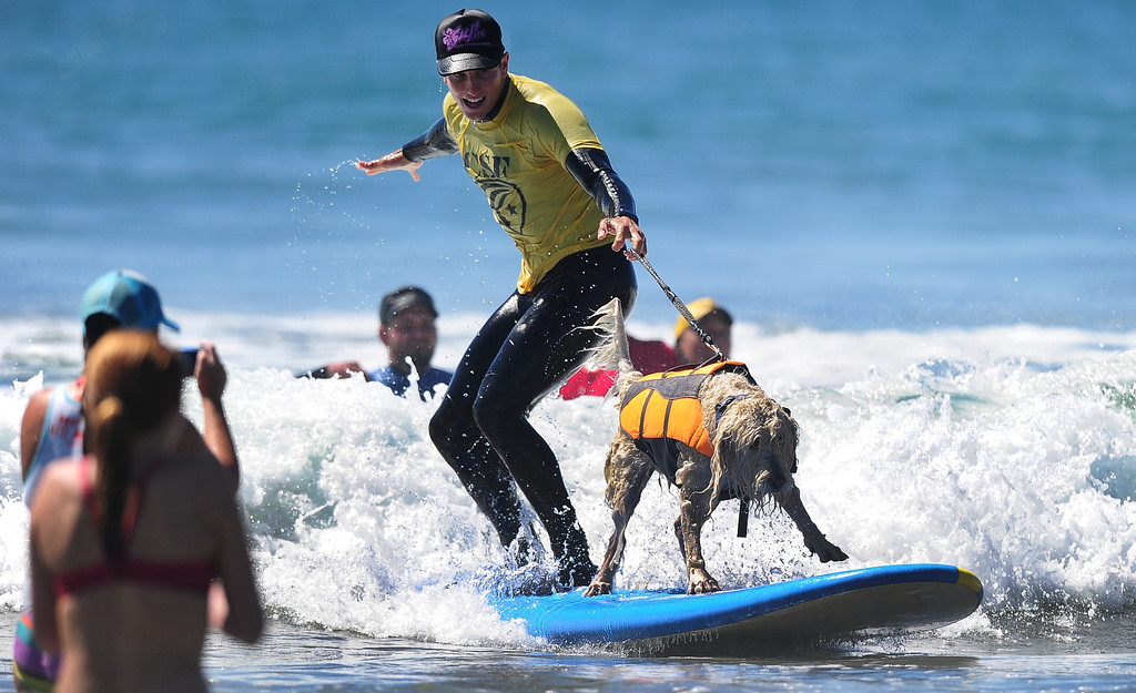 . A surfer catches a wave with his dog on board during the 5th Annual Surf Dog competition at Huntington Beach, California, on September 29, 2013.  AFP PHOTO/Frederic J.  BROWN/AFP/Getty Images