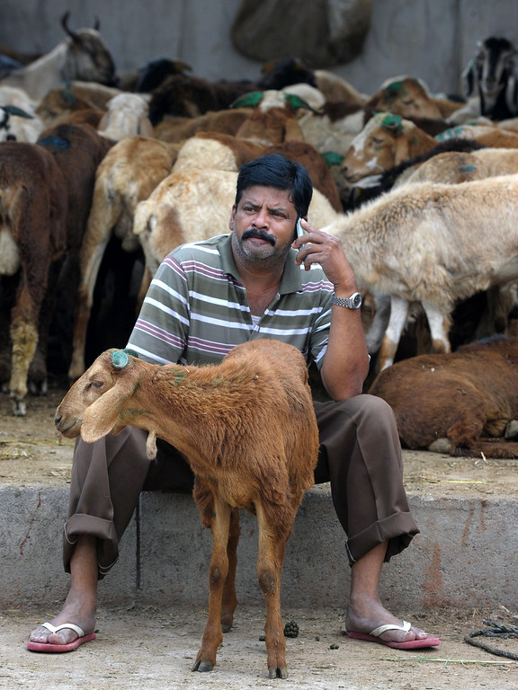 . An Indian animal vendor talks on his mobile phone at a livestock market in Hyderabad on October 15, 2013, ahead of the Muslim feast of Eid al-Adha. AFP PHOTO / Noah SEELAM/AFP/Getty Images