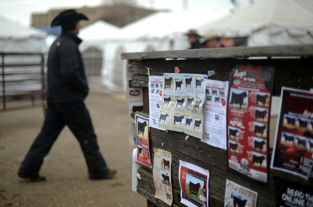 . Sales sign of bulls cover the fence of Stock Yard of 2013 National Western Stock Show on Tuesday. Denver. CO, January 15, 2013.  Hyoung Chang, The Denver Post