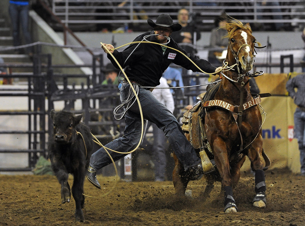 . DENVER, CO- JANUARY 27:   Jeremiah Peek of Pueblo, Colorado gets ready to take down a calf during the tie down roping event in the rodeo. The final day of the 2013 National Western Stock show was Sunday, January 27th.  One of the big events for the day was the PRCA Pro Rodeo finals in the Coliseum.  The event featured bareback riding, steer wrestling, team roping, saddle bronc riding, tie down roping, barrel racing and bull riding.  (Photo By Helen H. Richardson/ The Denver Post)