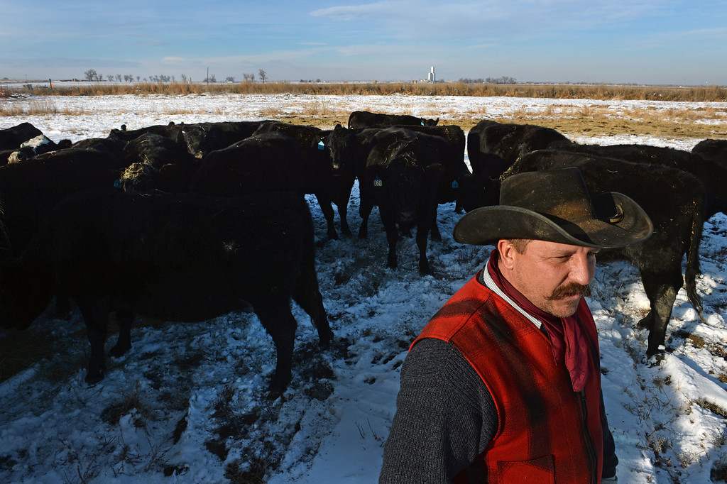 . KERSEY, CO - JANUARY 8, 2014: Rancher Jon Flack is surrounded by his cattle, had to rent this pasture to keep them on in Kersey, Co on January 8, 2014.  His pastures were too flooded to continue to graze his cattle on.  He is one of many ranchers that hasn\'t gotten much help from the government in helping to pay for expenses on his ranch incurred from the September floods. His losses included about  200 bales of hay worth about $30,000 which were destroyed when they were fully submerged in water.  As well many fences, fencing, corrals, ditches and land were severely damaged from the floods and need to be repaired.    (Photo By Helen H. Richardson/ The Denver Post)
