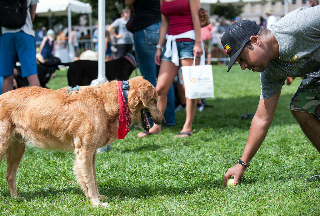 . David Espinosa plays with Marley, a golden retriever, inside a leash-free area at Woof Fest! in downtown Denver, Colorado, Sunday, August 17, 2014. The free festival included two music stages, food trucks, and space for pets and their owners to play. ((Photo By Brenden Neville/Special to The Denver Post))