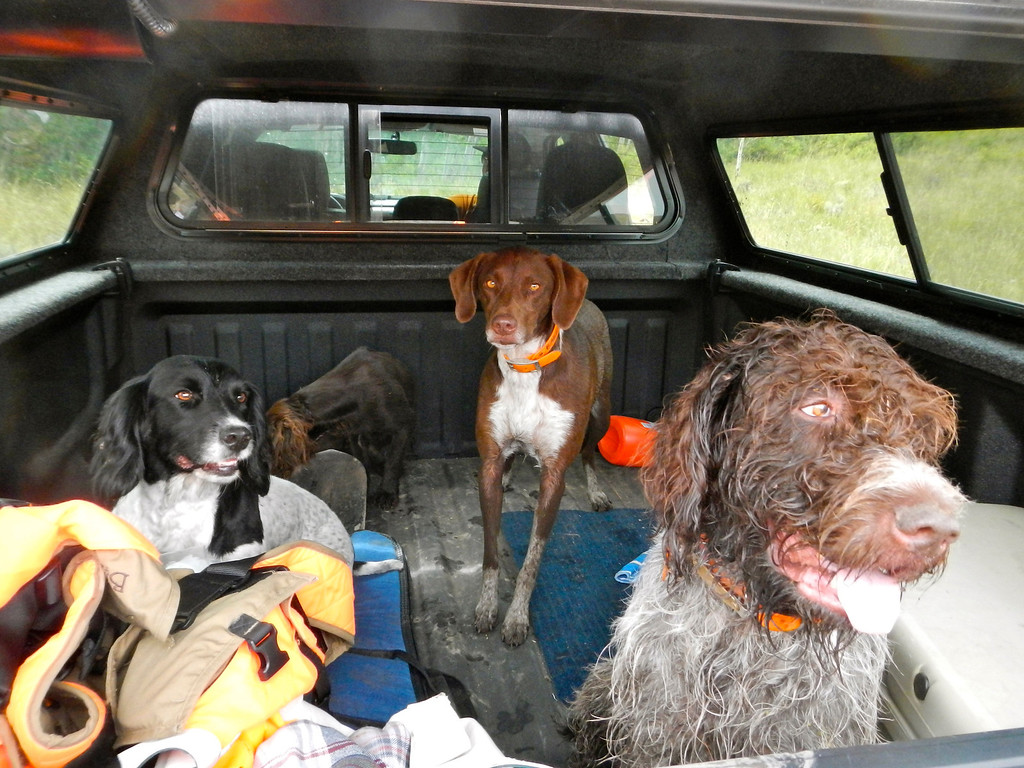. A truck bed full of dirty bird dogs after a semi-successful opening day grouse hunt. Scott Willoughby, The Denver Post