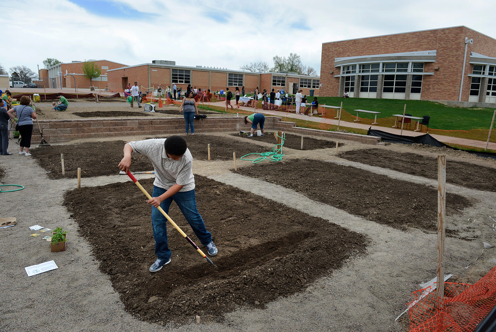 . AURORA, CO. - MAY 18:  Eighth grader Shacobie Garcia works in his plot during the North Middle School Garden Festival in Aurora, CO May 18, 2013. Garcia was on the garden\'s planning committee and is the only student to purchase his own plot. The celebration marked the opening of the first school-based community garden in Aurora Public Schools. The project, funded by The Piton Foundation, was made possible through a partnership of Aurora Public Schools, Denver Urban Gardens (DUG), and Anschutz Medical Campus Department of Family Medicine and BRANCH, a multi-disciplinary student organization from the medical campus. A second garden is scheduled to open later this year at Hinkley High School. (Photo By Craig F. Walker/The Denver Post)