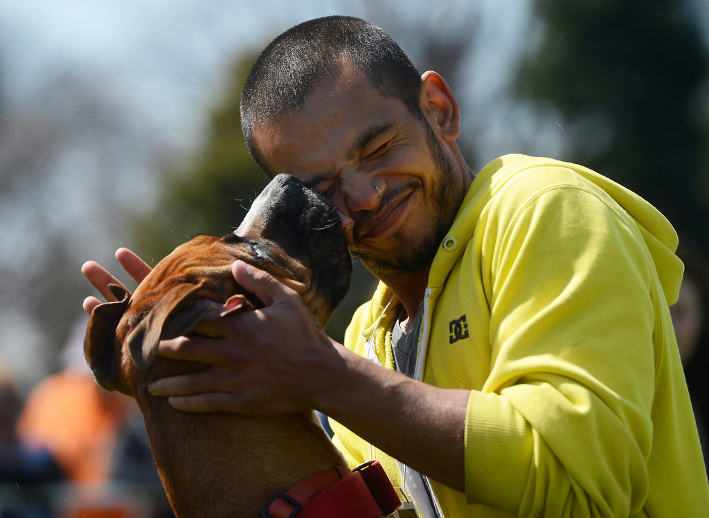 . DENVER, CO - MAY 4:  David Mosher gets a face full from his dog, �Diezle,� a boxer, during the Best Pet Kisser contest during the 20th annual Denver Dumb Friends League fundraiser, �Furry Scurry,� at Washington Park, Saturday, May 4, 2013. Over 12,000 people and 5000 dogs participated in the two-mile walk around the park and enjoyed refreshments, contests, demonstrations and many pet-related sponsors and vendors. Mosher and �Diezle� took first place. (Photo By Andy Cross/The Denver Post)