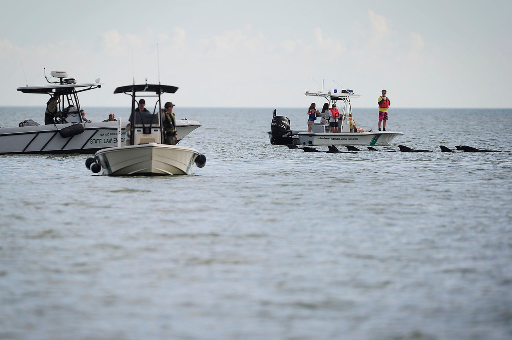 . Park Rangers and Law Enforcement patrol the waters to ensure safe passage for a pod of pilot whales, Wednesday, Dec. 4, 20(AP Photo/Naples Daily News, Corey Perrine)