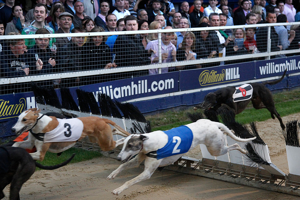 . Dogs race past punters in the 480 metres Champion Hurdle Final at Wimbledon Stadium in London June 11, 2011. In 1947, 60,000 spectators were recorded at the Derby at White City, one of 21 greyhound tracks then operating in London. In 2011 the Derby was held at Wimbledon Stadium ó now the only dog track left in London�ó and attendance was just 2,423. Picture taken June 11, 2011. REUTERS/Chris Helgren