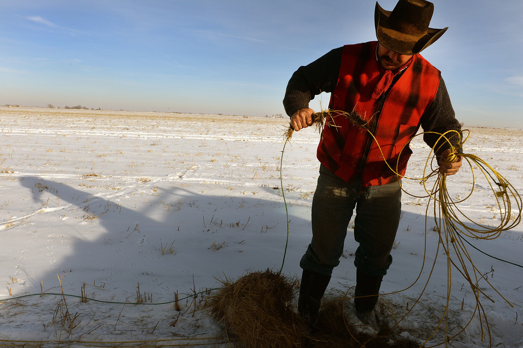 . KERSEY, CO - JANUARY 8, 2014: Rancher Jon Flack coils up line after feeding his cattle hay in a pasture he had to rent in Kersey, Co on January 8, 2014.  His pastures were too flooded to continue to graze his cattle on.  He is one of many ranchers that hasn\'t gotten much help from the government in helping to pay for expenses on his ranch incurred from the September floods. His losses included about  200 bales of hay worth about $30,000 which were destroyed when they were fully submerged in water.    As well many fences, fencing, corrals, ditches and land were severely damaged from the floods and need to be repaired.    (Photo By Helen H. Richardson/ The Denver Post)