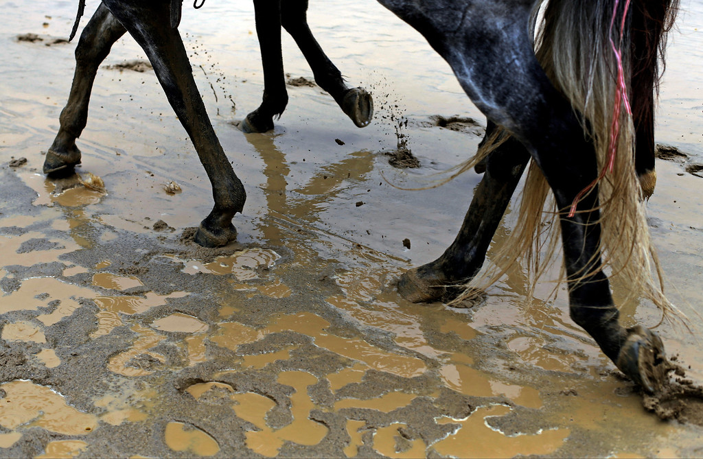 . Outrider horses walk through the mud on the Churchill Downs track before the 139th Kentucky Derby Saturday, May 4, 2013, in Louisville, Ky. (AP Photo/David Goldman)