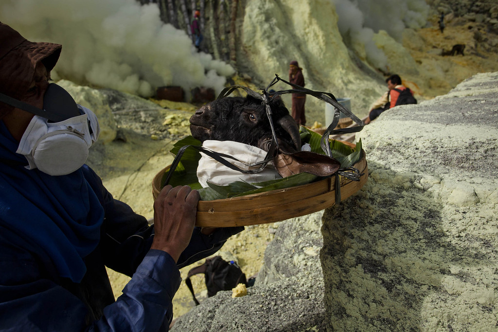. A miner carries a goats head for burial in the crater as part of an annual offering ceremony on the Ijen volcano on December 17, 2013 in Yogyakarta, Indonesia.  T(Photo by Ulet Ifansasti/Getty Images)
