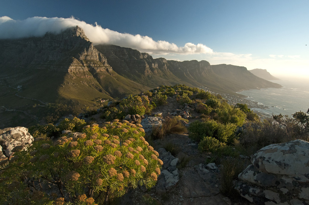 . Table Mountain shrouded beneath the billowing �Table Cloth�. This icon of the continent overlooks Africa�s southernmost tip, the Cape of Good Hope, where the cold Atlantic Ocean meets the warm Indian Ocean to create the cloud over Table Mountain. But the interaction between these two great oceans has done more than produce cloud, it has shaped the whole of Africa�s Great Cape, from here all the way to the savannah of the East. Discovery Channel