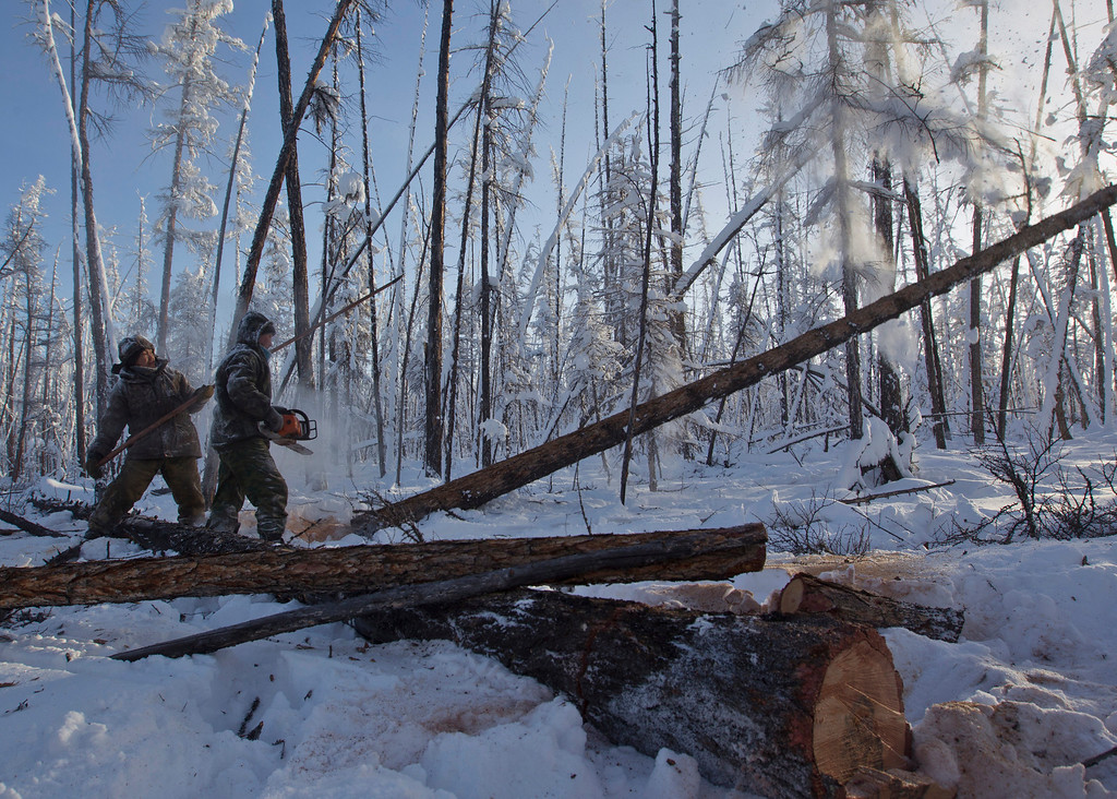 . Lumberjacks Alexey Egorov, 45, and Semion Vinokurov, 53, cut down a tree in the forest outside the village of Tomtor in the Oymyakon valley in the Republic of Sakha, northeast Russia, January 29, 2013. The coldest temperatures in the northern hemisphere have been recorded in Sakha, the location of the Oymyakon valley, where according to the United Kingdom Met Office a temperature of -67.8 degrees Celsius (-90 degrees Fahrenheit) was registered in 1933 - the coldest on record in the northern hemisphere since the beginning of the 20th century. Yet despite the harsh climate, people live in the valley, and the area is equipped with schools, a post office, a bank, and even an airport runway (albeit open only in the summer).    Picture taken January 29, 2013.    REUTERS/Maxim Shemetov