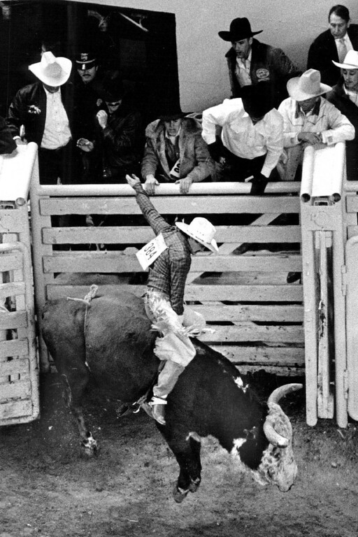 . Cowboy Steve Manstedt, age 21, didn\'t last longer than a few seconds on Sunni\'s Wrangler, a bull that few people ride. 1987. Karl Gehring, The Denver Post