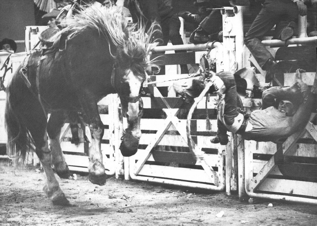 . This Ride In The Saddle Bronc Event Lasted About Two Seconds Before Tom McGill Was Thrown Against The Chutes. The Duncan, Okla., cowboy was tossed off by a big critter named Born To Buck, owned by former cowboy champion Casey Tibbs. 1969. Bob Jackson, The Denver Post