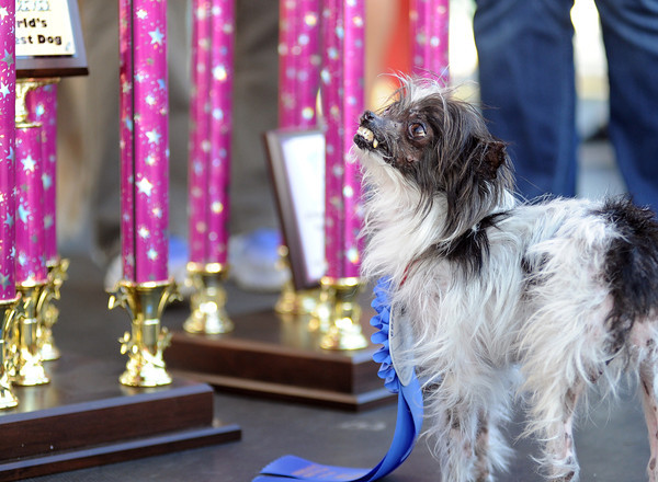 PHOTOS: World's Ugliest Dog Competition in Petaluma, California