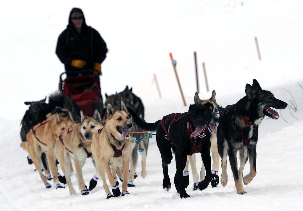 . Four-time Iditarod Trail sled dog race champion Jeff King arrives in Anvik, Alaska, Friday, March 8, 2013. (AP Photo/Anchorage Daily News, Bill Roth)