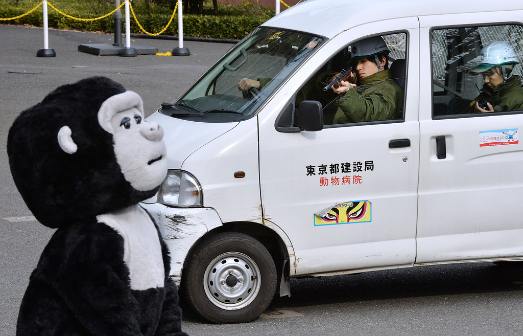. A zookeeper (top C) aims a tranquilizer gun towards an animal keeper dressed in a gorilla costume during a drill to practice what to do in the event of an animal escape at the Ueno zoo in Tokyo on February 6, 2014. About 70 zookeepers participated in the annual drill.     AFP PHOTO / KAZUHIRO NOGI/AFP/Getty Images